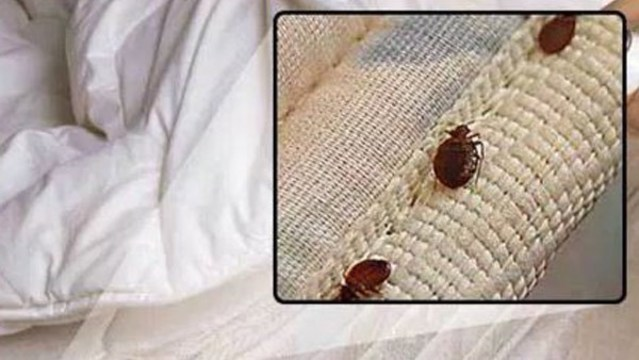Myrtle Beach Included In Orkin S List Of Worst Cities For Bed Bugs 2017