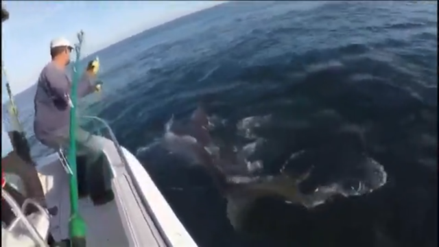 Take a look at this 3,000 lbs great white caught off Hilton Head