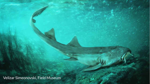 The NC State researcher helps to discover shark species living next to T. rex