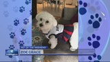 Sunday's Pet of the Weekend is Game Day ready!